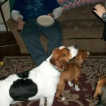 Zues and friends hoping for a treat...